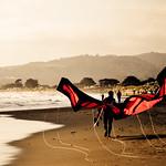 Monarch butterfly  : the kitesurfer returns