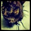 Yma cat