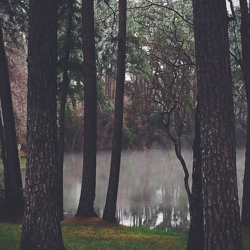trees usa lake fog texas magnolia