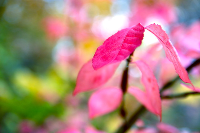 picture of pink - photo #27
