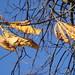 Vent fin d'automne