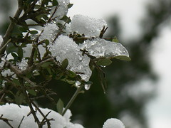 De neu a gel