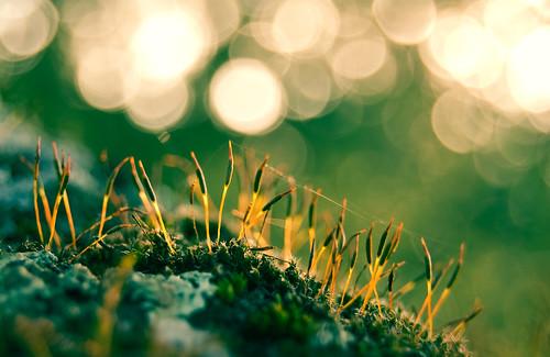 light españa naturaleza macro musgo luz nature moss spain nikon bokeh desenfoque 1855 extremadura d40 azzacov