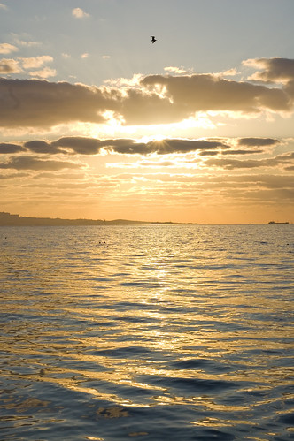 morning sea sky sun reflection bird water clouds sunrise nikon waves ray seagull baku azerbaijan caspian nikkor rise 18 50 d40