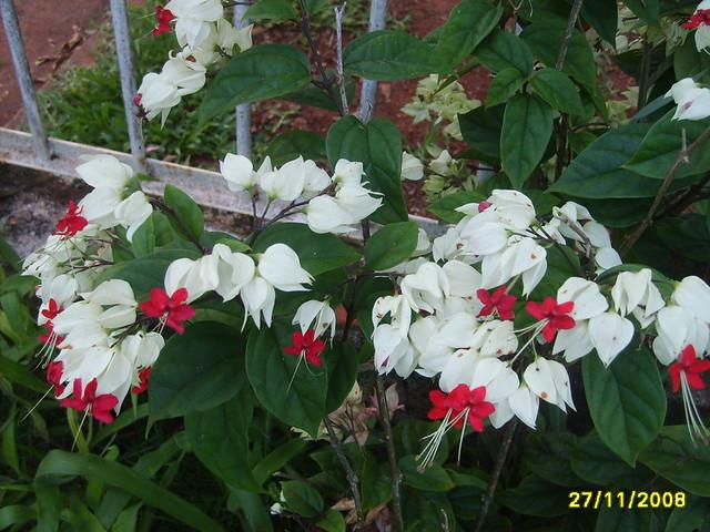 flores no jardim de deus : flores no jardim de deus:flores do meu jardim.