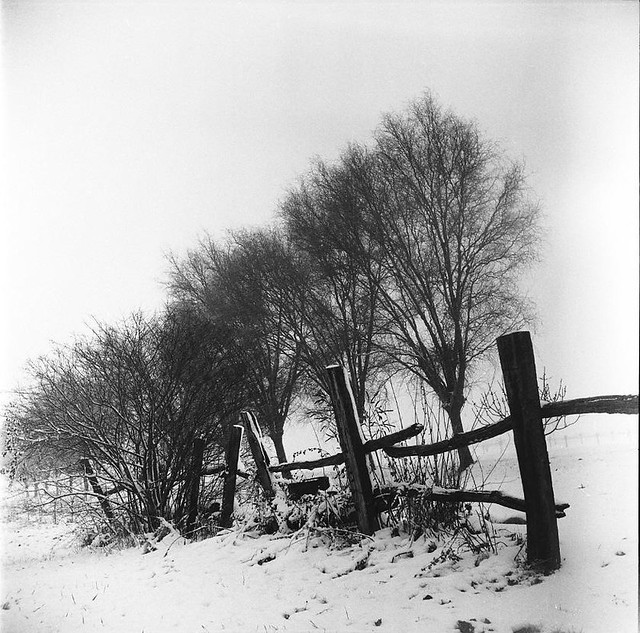 white 'n snow