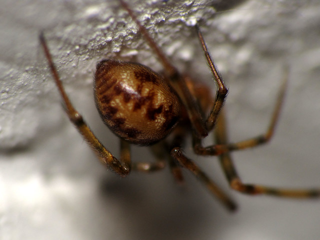 no photos please this little spider in my basement wasn 39 t