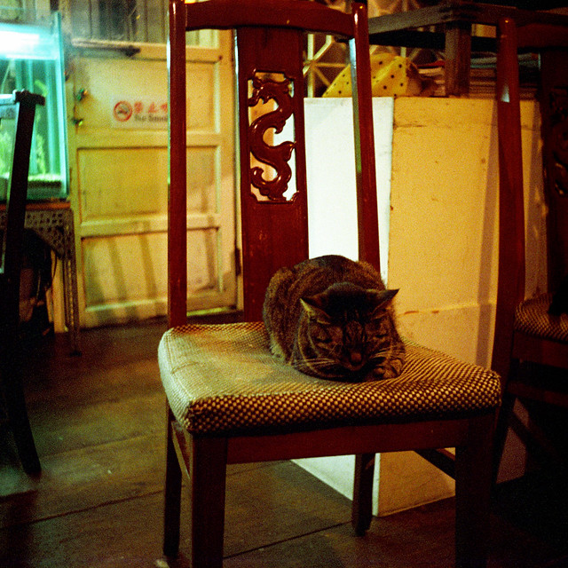 ZABU貓不是夜貓