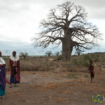 Masai Women at Baobab Tree - Lake Manyara, Tanzania