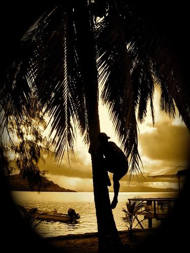 aperturealbum wedding weddingallcameras2009album aperturealbum wedding weddingfavorites beach coconut fiji iphotooriginal sunset