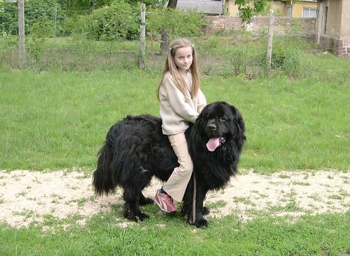 ponydog nostalgia 2004-2007