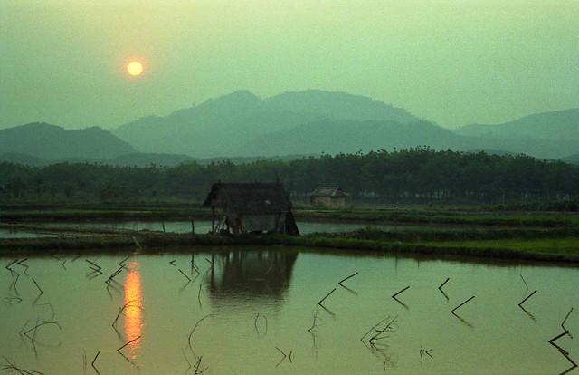Sunset over rice fields; NE of Galamba, Xishuangbanna Region, Yunnan, China