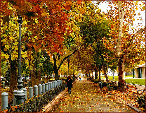 Budapest in autumn bloom