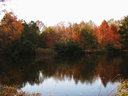 statepark park travel trees usa lake reflection green fall nature water canon landscapes daylight louisiana scenery view state south peaceful powershot civilwar daytime tranquil sx10is waltphotos