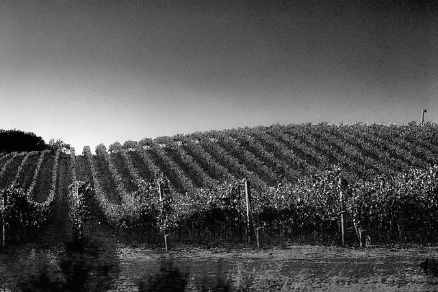 Sonoma, CA (2007)