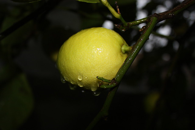 Hiw Lemon Water Should You Drink A Day