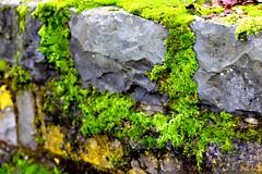 mossy stone wall     MG 9167