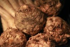 coconut(0.0), matsutake(0.0), root(1.0), vegetable(1.0), produce(1.0), food(1.0), tuber(1.0),