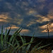 Atardecer con maguey by P@ND£PHOTO's