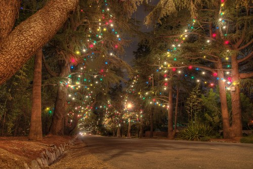 Altadena Christmas Tree Lane