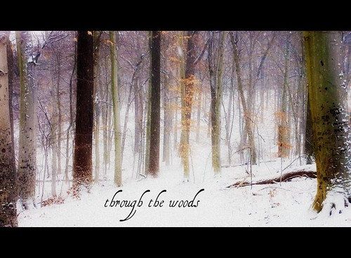 through the woods - Explore!