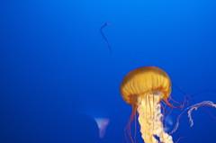 Jellyfish 2
