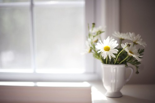 Daisies are like sunshine to the ground.