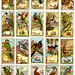 Birds of Australasia cigarette cards