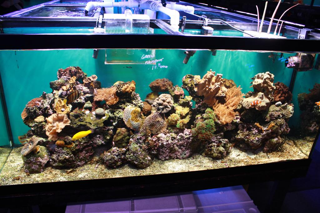 Saltwater versus freshwater aquariums for Marine fish tanks