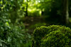 20150906-07_Moss + Woods - Playing with Focus + Bokeh