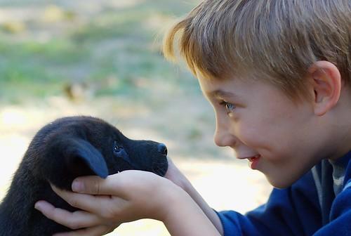 Catarata em cães - PetLove