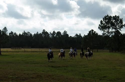 horses florida bunnell