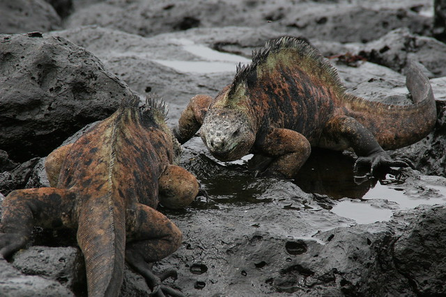 Galapagos Islands Wildlife Tours