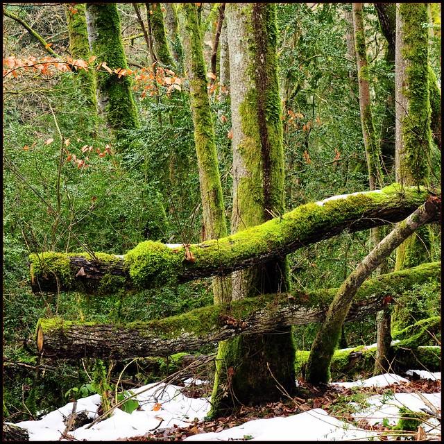 La mousse des arbres flickr photo sharing - Mousse sur les arbres ...