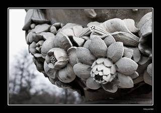 Flores de piedra