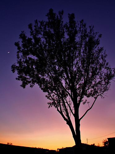california travel sunset usa moon tree nature canon landscape photo colorful venus riverside picture photographers newyearseve planets 2008 40d photographersnaturecom davetoussaint davetoussaintcom