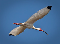 ibis-overhead