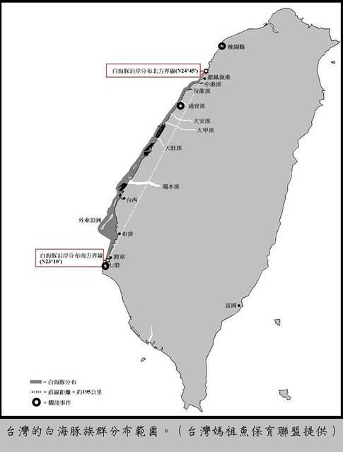 台南仍有白海豚目擊記錄,以目前重要棲息環境的畫法,一旦白海豚越過範圍,仍受拖網、刺網威脅,但白海豚不容損失,因此必須要能涵蓋其所有活動範圍。(圖片來源:媽祖漁聯盟)