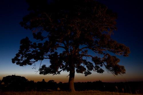 sunset france tree grass europa europe nightlife morvan ozolles