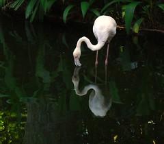 Brasil-Iguassu- P.das Aves