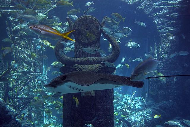 Atlantis Aquarium Flickr Photo Sharing