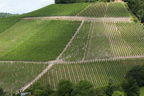 texture germany view wine scene fresh pfalz saarburg