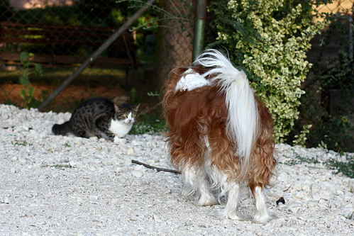 Susie and a Cat