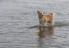 Dirk's first time in the water