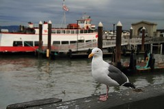 c 2009 Renee Silverman San Francisco's Fisherman's Wharf.