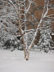 plant(0.0), branch(1.0), winter(1.0), tree(1.0), snow(1.0), rain and snow mixed(1.0), ice(1.0), frost(1.0), winter storm(1.0), blizzard(1.0), freezing(1.0), twig(1.0),