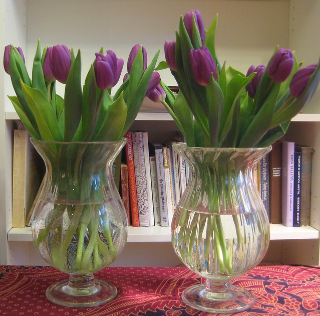 001 lila tulips
