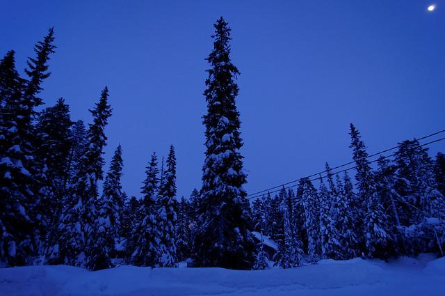 Momento azul en los árboles
