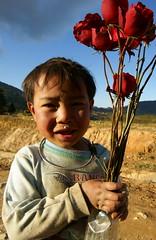 Rose rosse per te.....