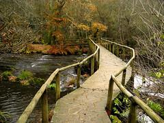 Puente en Verdes